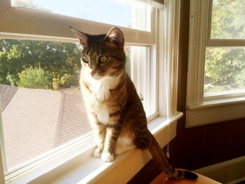 Luna sitting on window sill wide eyed