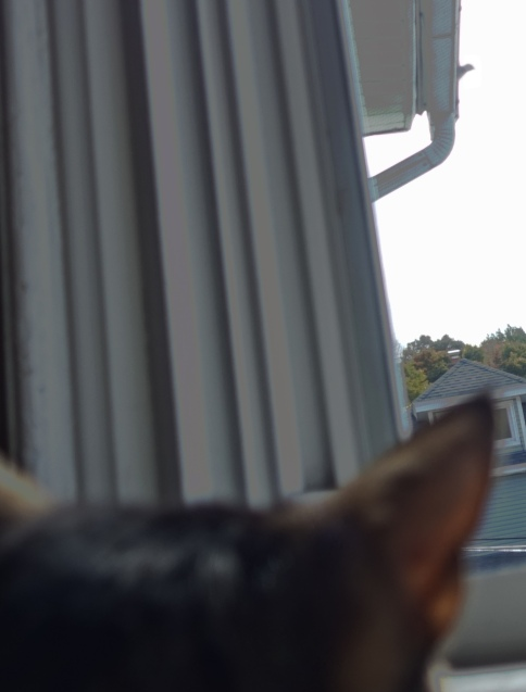 Luna watching bird on roof