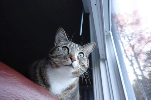 Luna wide eyed near window looking forward