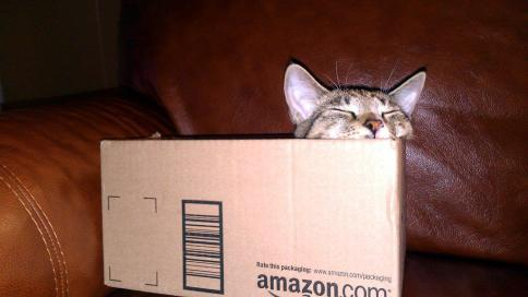 luna_in_amazon_box