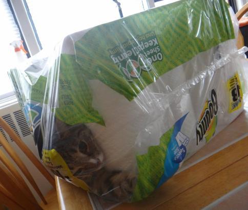 luna_stuck_with_paper_towels