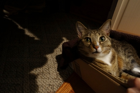 Luna in box looking to camera lit from side