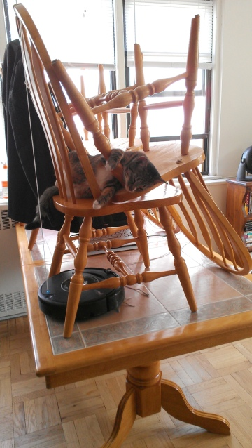 Luna in chair on table sleeping