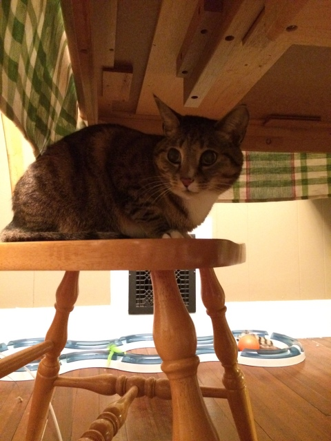 Luna on chair under table