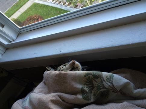 Luna under blanket near window with one eye showing