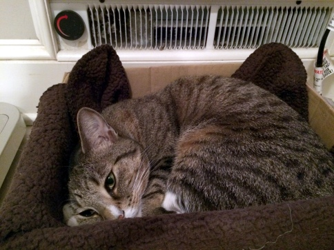 Luna curled up in box in front of bathroom heater