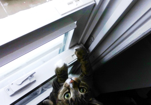 Luna looking cute trying to get out window