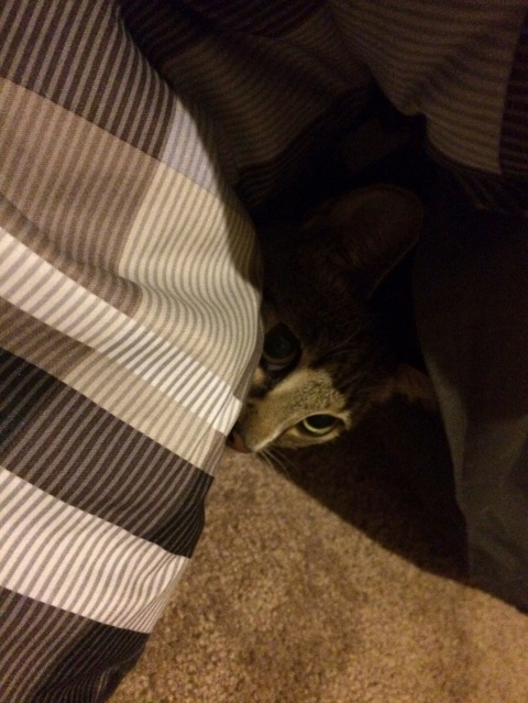 Luna peeking out with one eye from under blanket