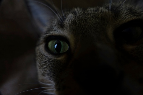 Luna's eye showing with face masked by darkness