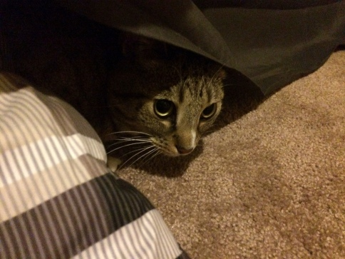 Luna's face peeking out from under blanket
