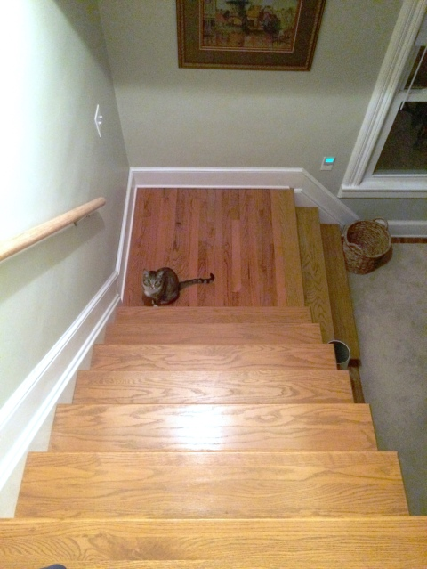 Luna at bottom of stairs looking up