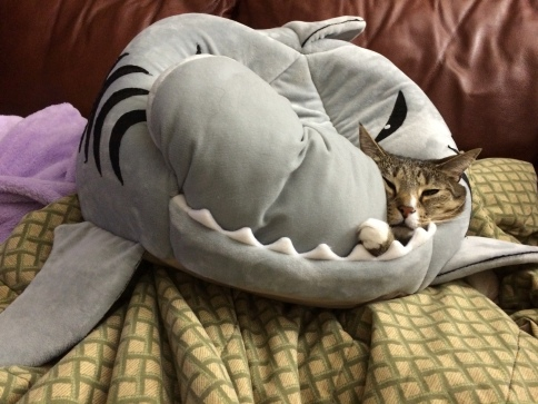 Luna being engulfed by shark