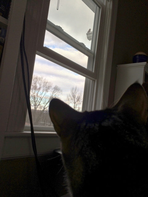Luna looking up out window at bird on ledge