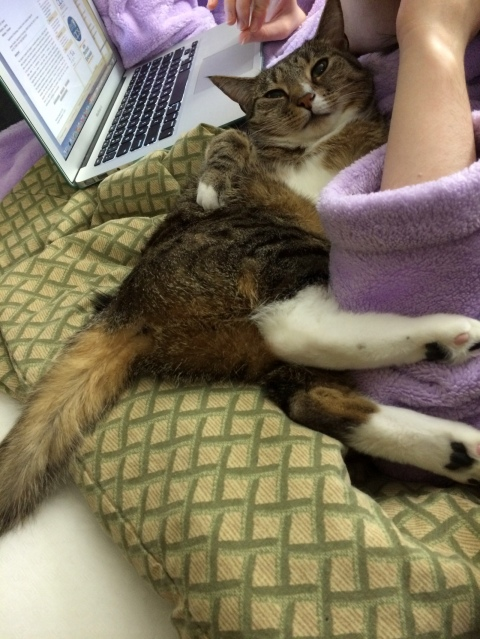 Luna lying on blanket near computer and purple arm
