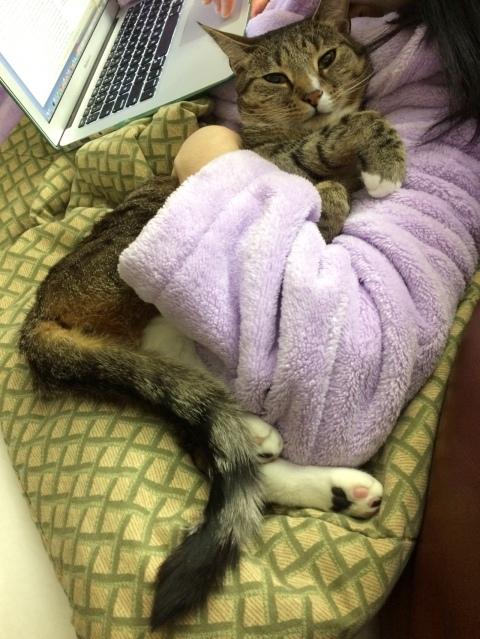 Luna lying on blanket near computer held by purple arm