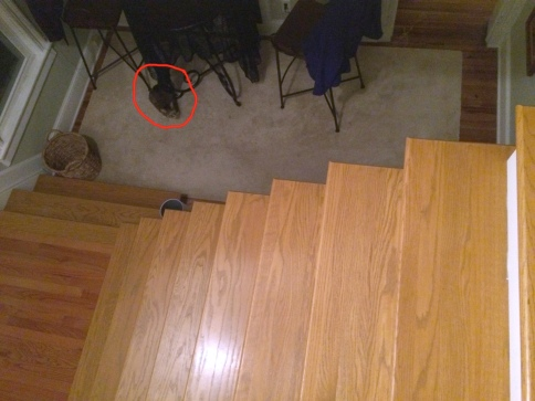 Luna on carpet near stairs circled in red