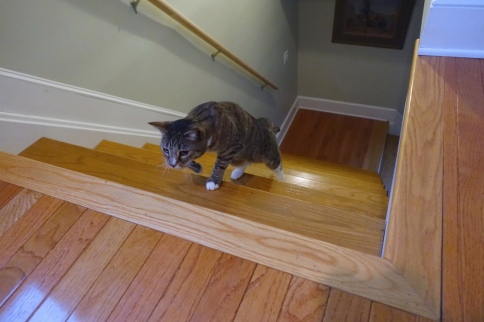 Luna prowling up middle of stairs toward treat