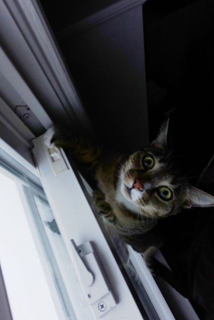 Determined Luna trying to jump out window