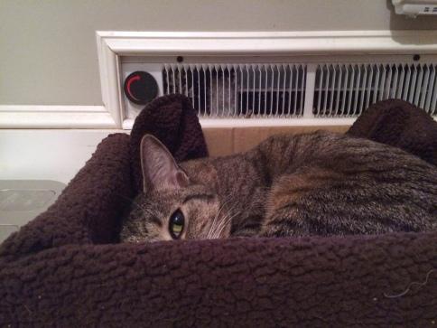 Luna curled in box near bathroom heater with one eye showing