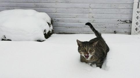 Luna hates snow