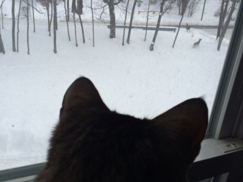 Luna watching deer on snow