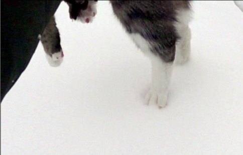 Paws of Luna about to get dumped in snow