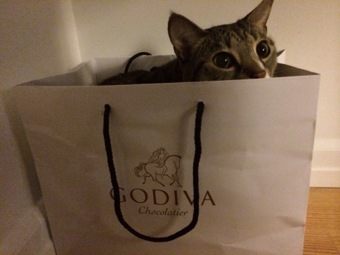 Luna hiding in Godiva bag