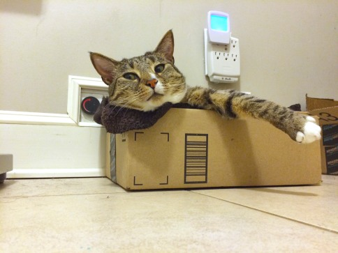Upward view of Luna in box looking to left with one paw hanging out