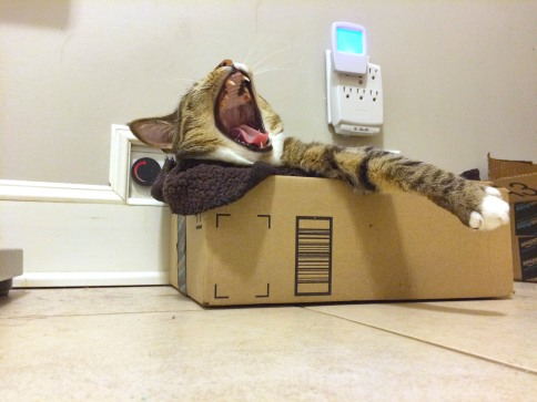 Upward view of Luna in box yawning with one paw hanging out
