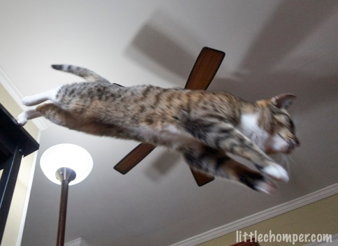 Luna in midair jumping down from table from below to side with one foot still touching table
