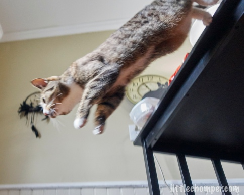 Luna jumping downward from table from below to side with feet still touching table