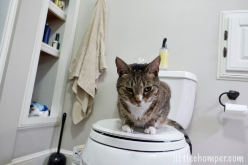 Luna on toilet seat with eyes half open