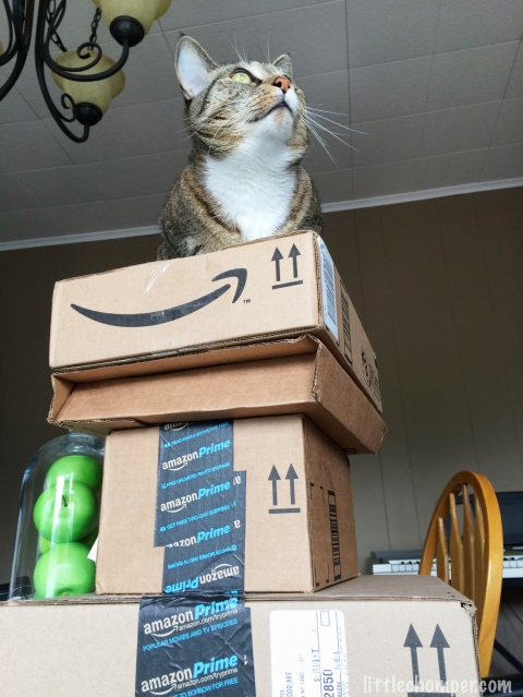 Luna atop stack of Amazon boxes