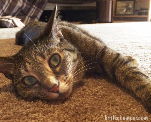 Luna lying on carpet with head on carpet looking straight at camera