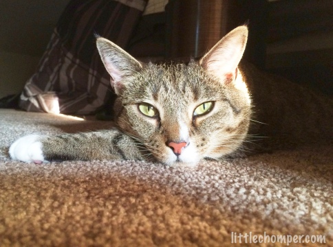 Luna on carpet staring at camera with paw extended to left