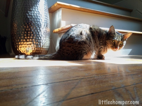 Luna on floor in sunbeam near vase