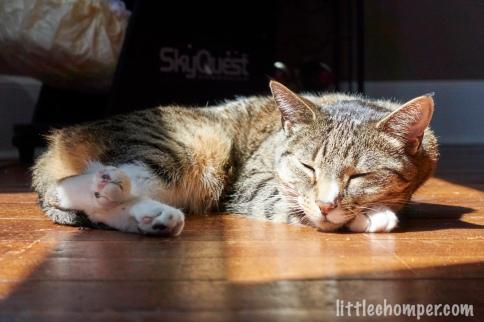 Luna sleeping in sunbeam on floor with nose and feet facing camera