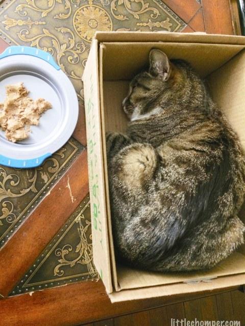 Luna sleeping rather than eating food