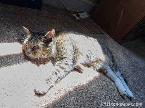 Luna sunbathing on carpet with paws stretched