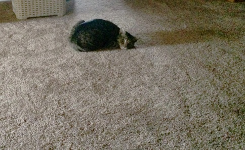 Luna waiting on carpet