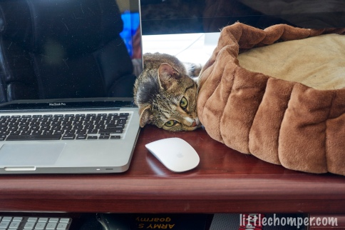 Luna with face tucked between bed and laptop behind mouse