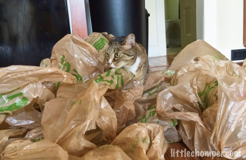 Luna looking over a floor of grocery bags