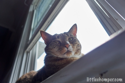 Luna lying along window looking down stonily