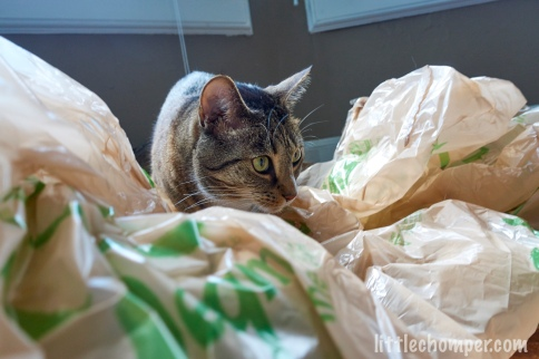 Luna sneaking through grocery bags