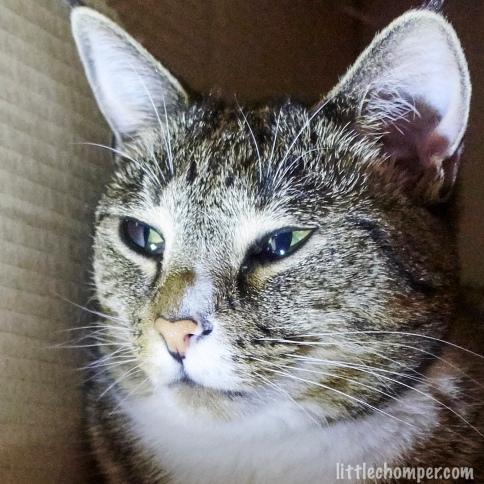 Close up of Luna near wall of box with narrow eyes