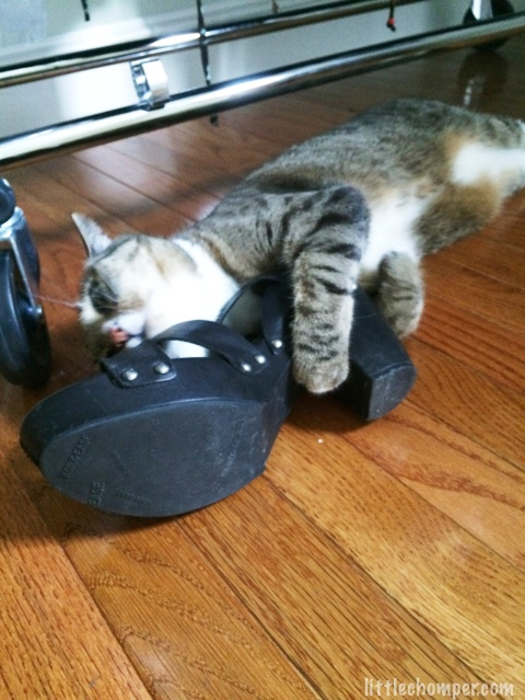Luna embracing a shoe with head stretched out