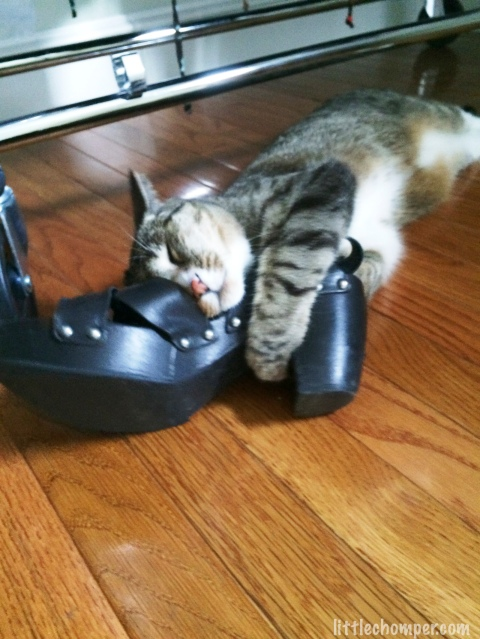 Luna embracing a shoe