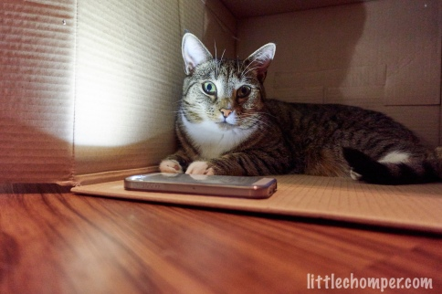 Luna lit in box looking at camera with one eye brighter