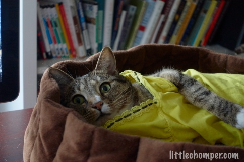 Luna lounging in her yellow nightie