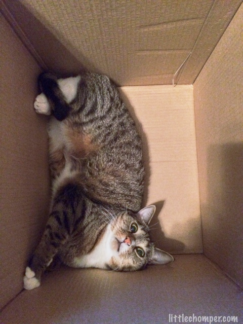 Luna on side lying in bottom of box